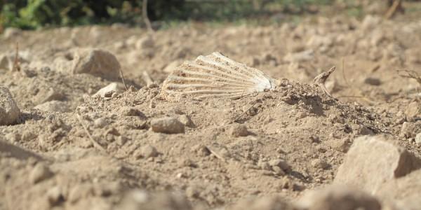 Calamoni di Favignana: particolare del terreno con fossile di conchiglia
