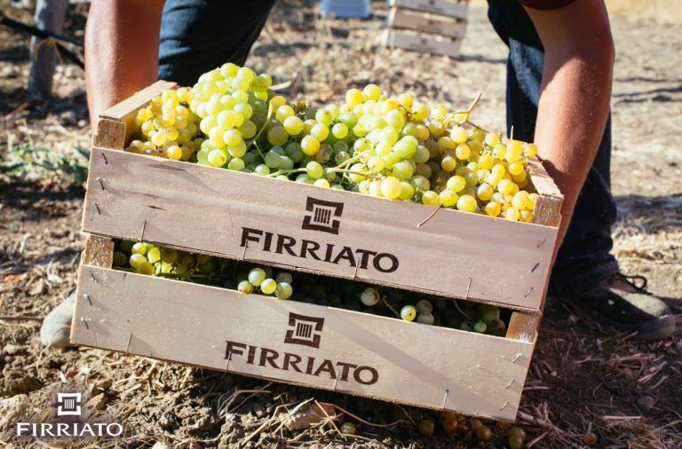 ©all copyright reserved by Firriato - MG 1042 768x506 - La vendemmia