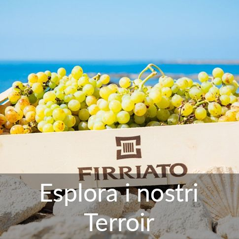 ©all copyright reserved by Firriato - terroir 2 - Homepage