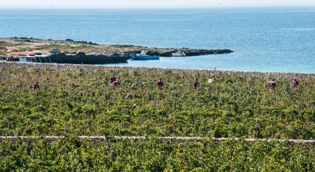 ©all copyright reserved by Firriato - 2 Vista da Calamoni di Favignana 2 1100x600 - Heroic viticulture: Etna and Favignana