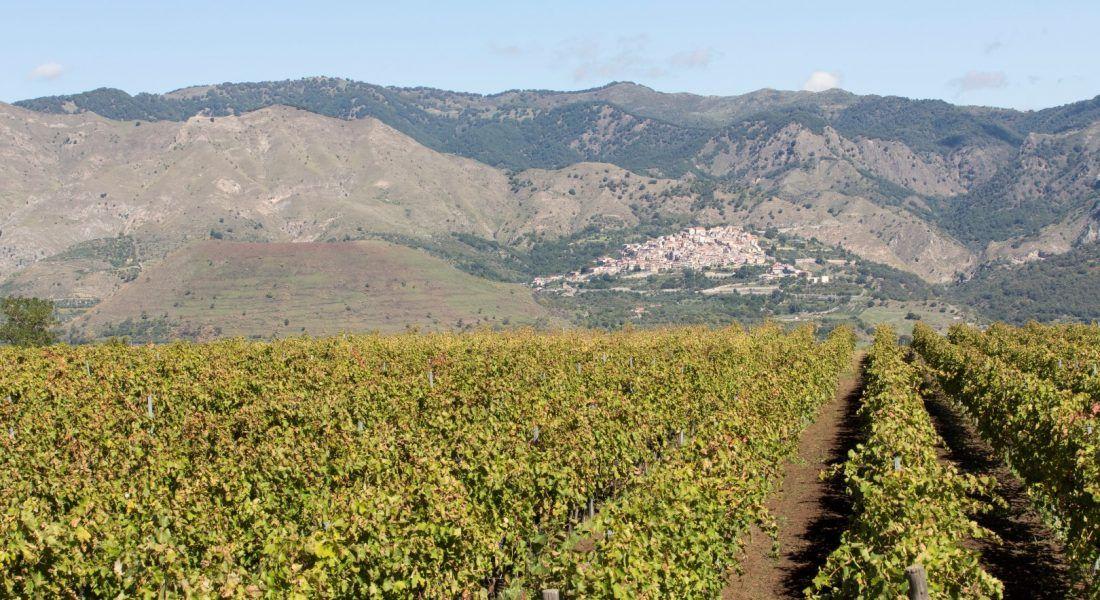 ©all copyright reserved by Firriato - 6 I vigneti di Cavanera 1100x600 - Heroic viticulture: Etna and Favignana