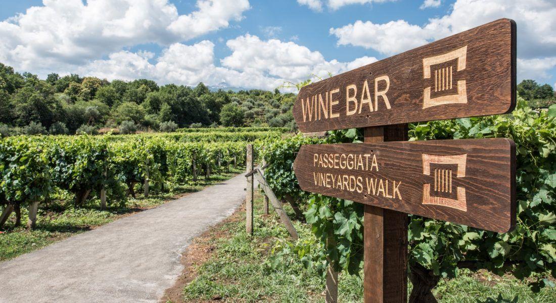 ©all copyright reserved by Firriato - 7 La passeggiata di Cavanera Etnea 1100x600 - Heroic viticulture: Etna and Favignana