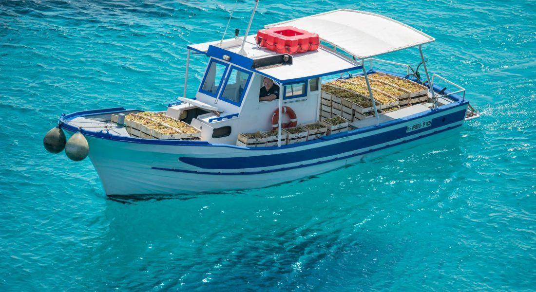 ©all copyright reserved by Firriato - 9 Vendemmia Favignana barca 1100x600 - 让我们保护一片真正的沃土