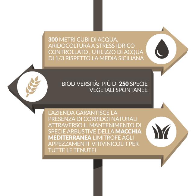 ©all copyright reserved by Firriato - Sostenibilita in vigna - Sostenibilità e Biologico