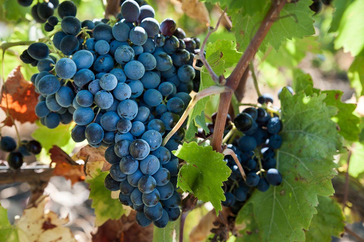 ©all copyright reserved by Firriato - degustazioni gli autctoni firriato 1 - 访问葡萄酒品酒