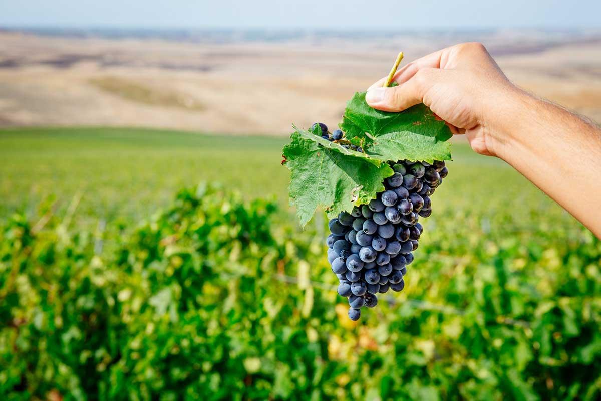 ©all copyright reserved by Firriato - Blend di quattro vitigni autoctoni Siciliani - Quater Vitis Rosso