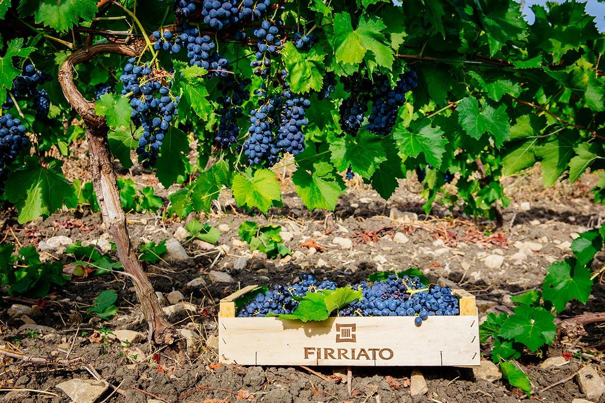 ©all copyright reserved by Firriato - Il Rosso delle Egadi 1 - Favinia Le Sciabiche