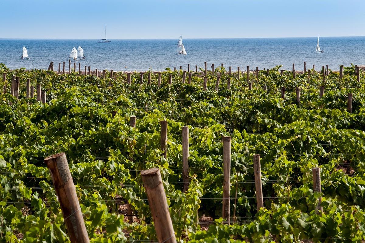 ©all copyright reserved by Firriato - La Viticoltura di mare 1 - Favinia Le Sciabiche
