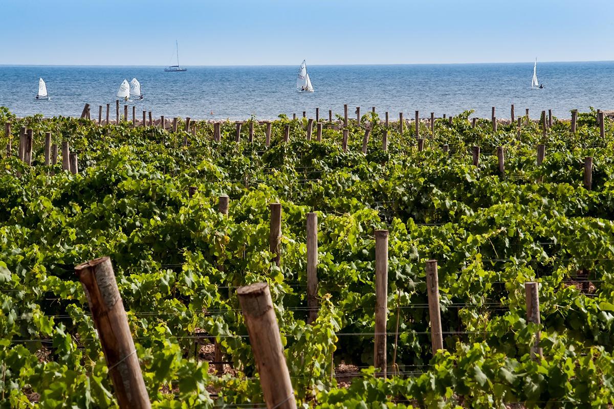 ©all copyright reserved by Firriato - La Viticoltura di mare - Favinia Le Sciabiche