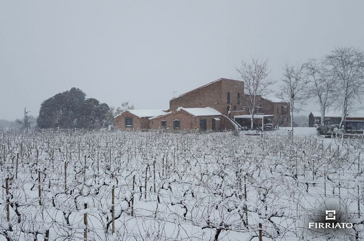 ©all copyright reserved by Firriato - 03 - The Young Etna Terroir