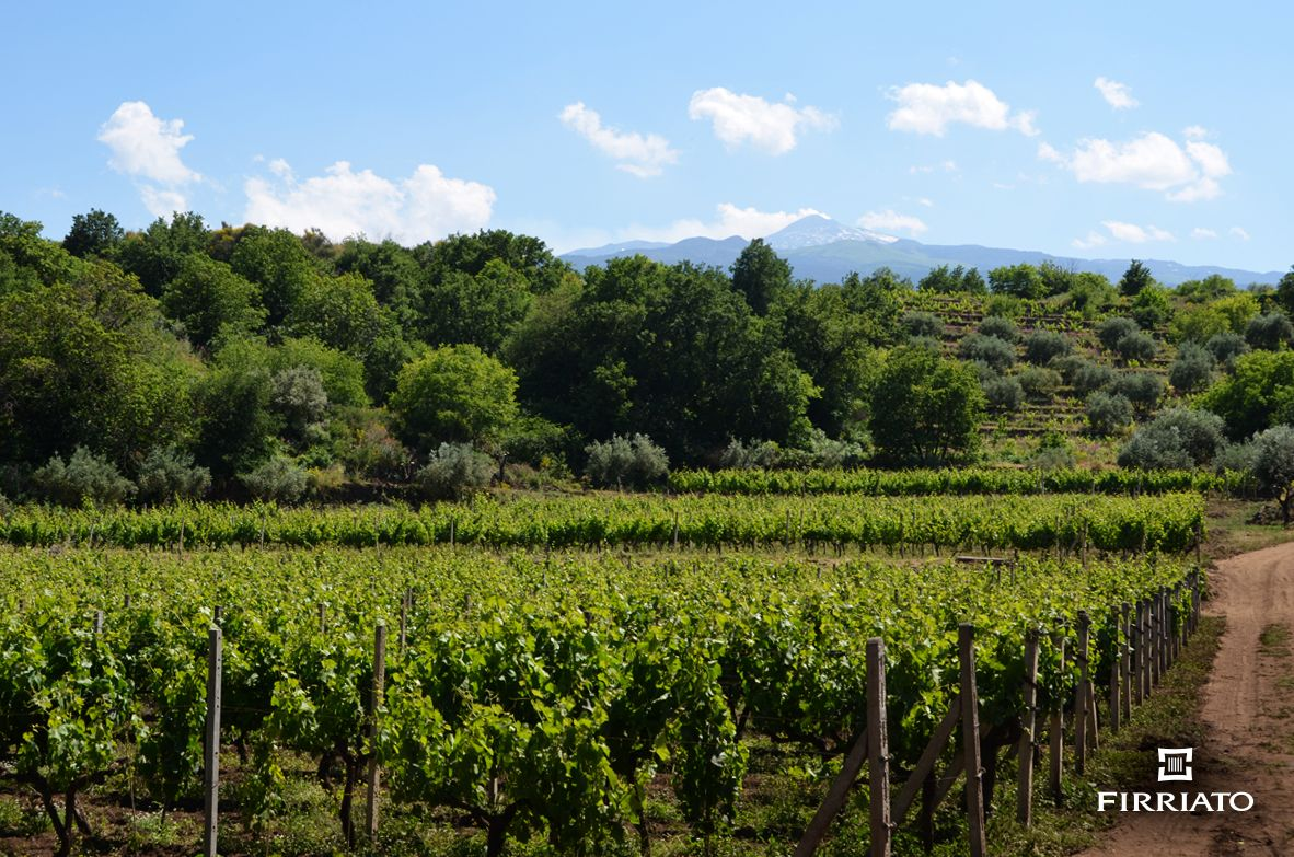©all copyright reserved by Firriato - 05 - The Young Etna Terroir