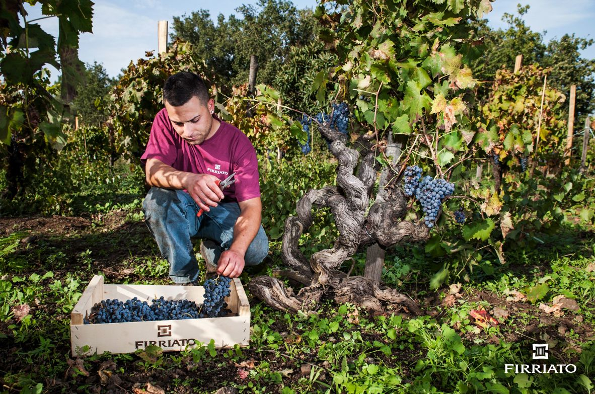 ©all copyright reserved by Firriato - 08 - The Young Etna Terroir