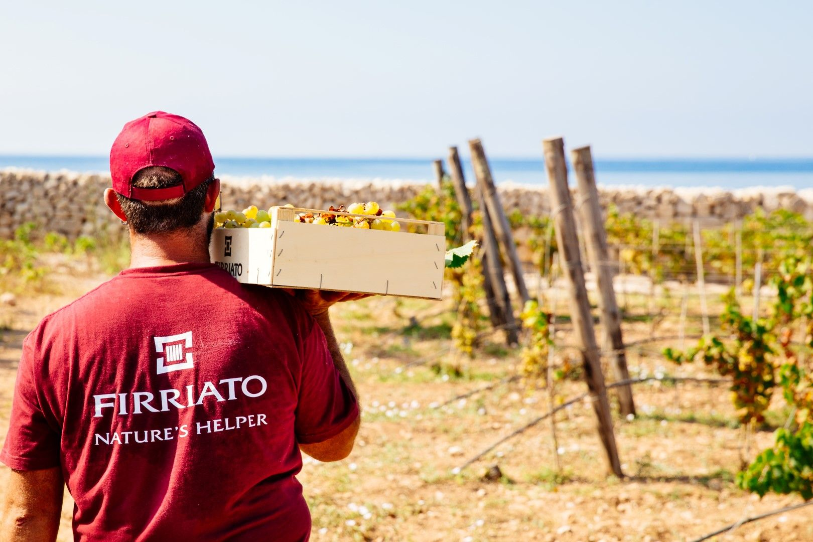 ©all copyright reserved by Firriato - 3 Linflusso del mare Grape Harvest in Favignana island - 法维尼亚纳岛卡拉莫尼