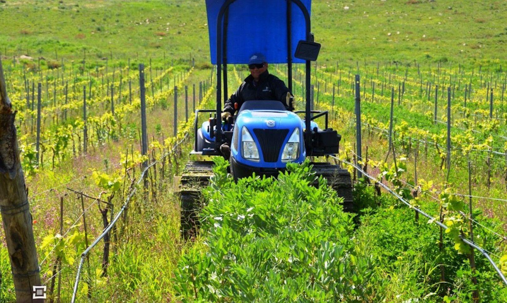 ©all copyright reserved by Firriato - 5 Pretiche agronomiche il sovescio del favino 1 - 巴里奧-索里亚