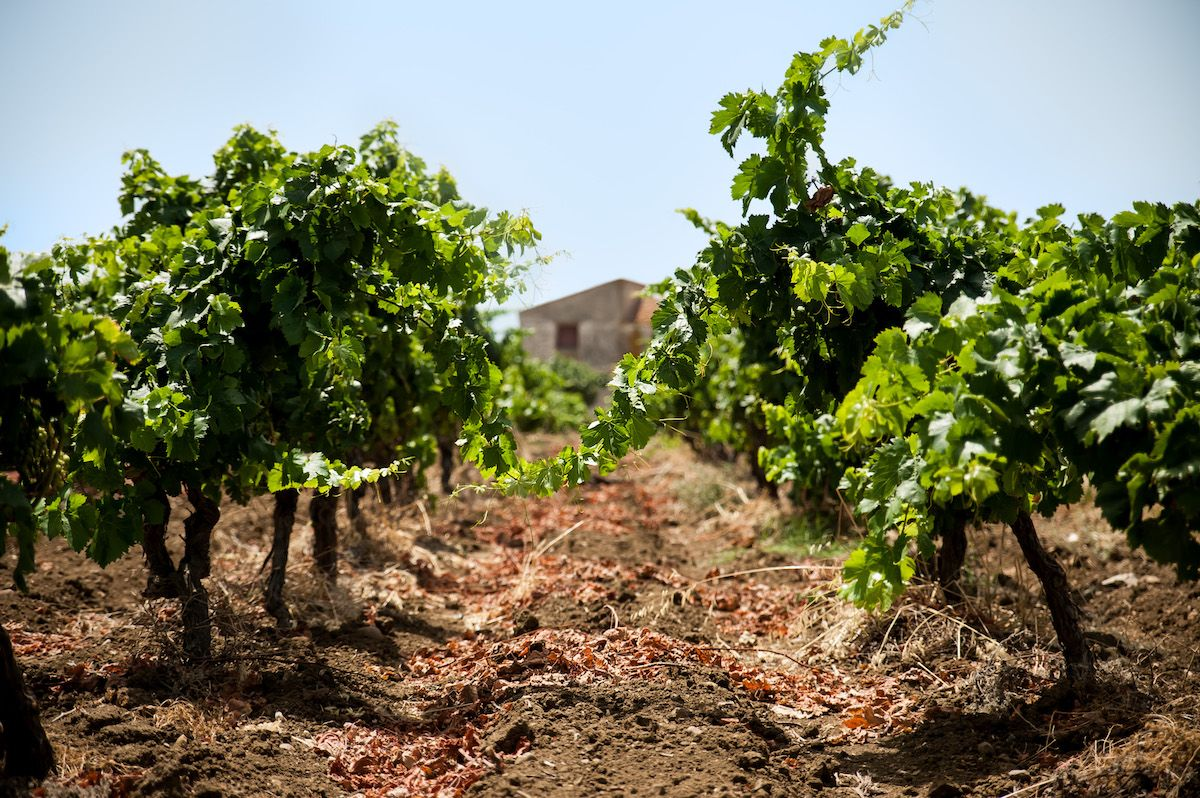 ©all copyright reserved by Firriato - 7 Terroir antoniopistillo.com 14LuglioFirriatoGiorno7 DSC3844 Edit - 达卡拉-波洛梅奥