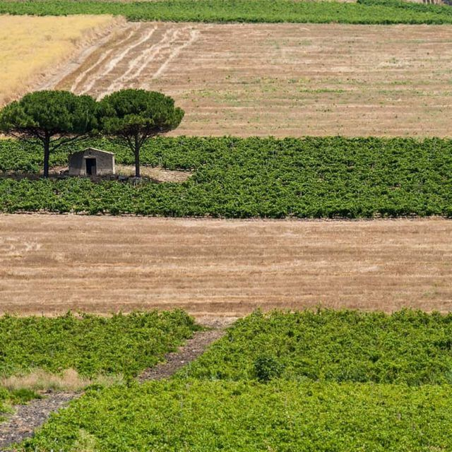 ©all copyright reserved by Firriato - 1 Borgo Guarini 640x640 - Sono iniziati i 100 giorni di vendemmia di Firriato
