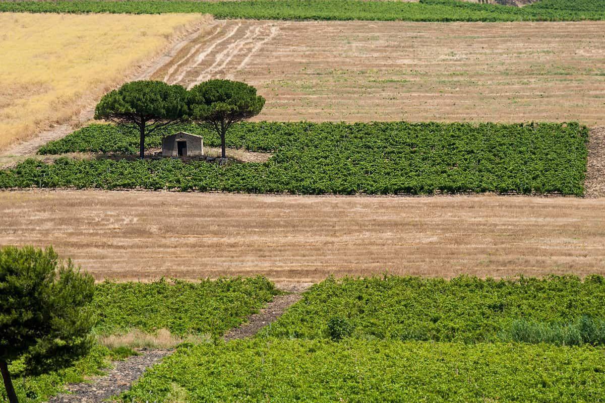 ©all copyright reserved by Firriato - 1 Borgo Guarini - Le Tenute