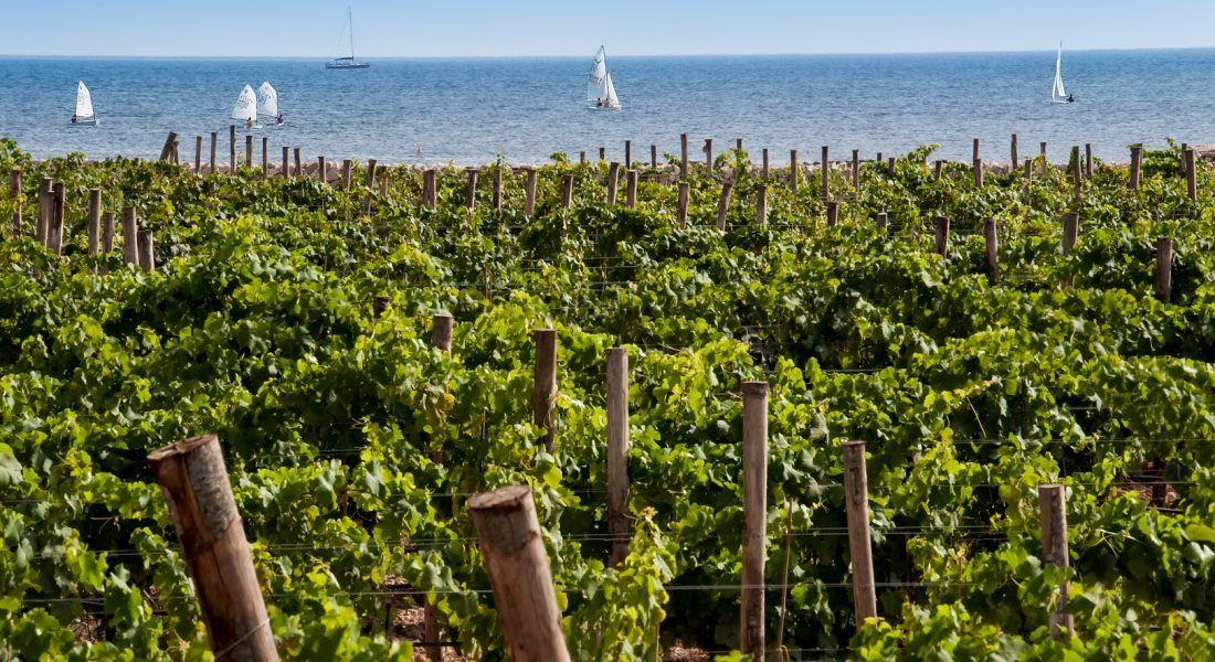 ©all copyright reserved by Firriato - 1 Vigneti di Favignana 1100x600 - La viticultura eroica: Etna e Favignana