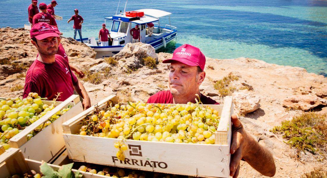 ©all copyright reserved by Firriato - 5 Il passaggio delle uve 1100x600 - La viticultura eroica: Etna e Favignana