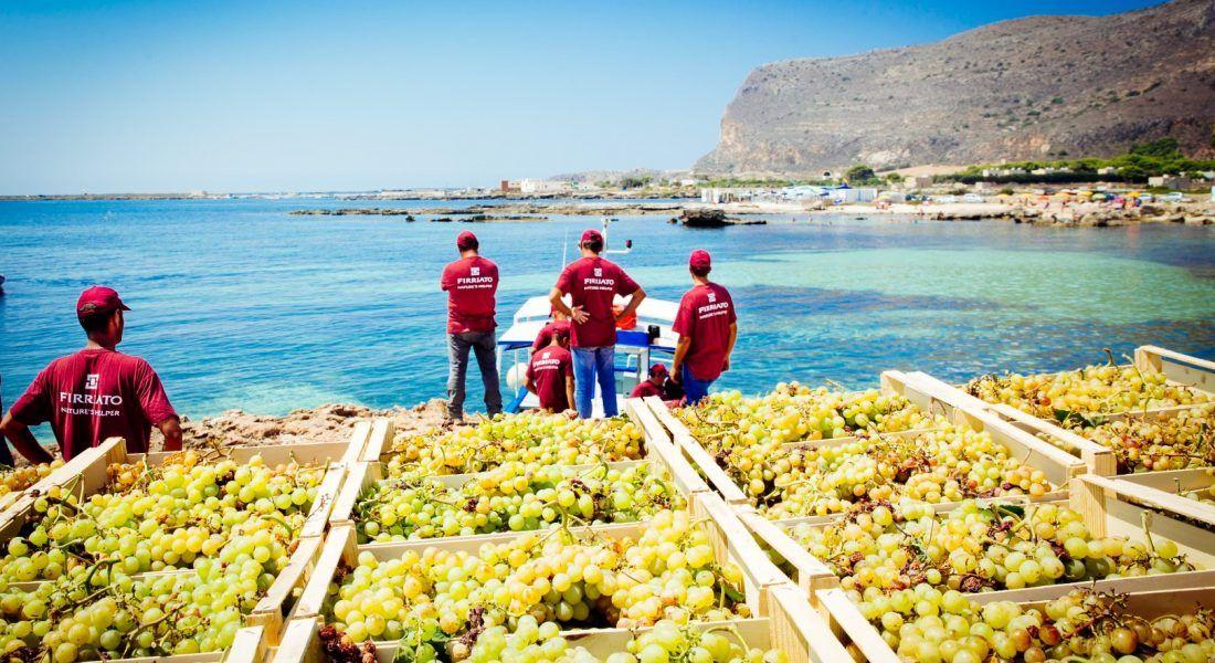 ©all copyright reserved by Firriato - 6 Calamoni Favignana vendemmia tasporto 1100x600 - La viticultura eroica: Etna e Favignana