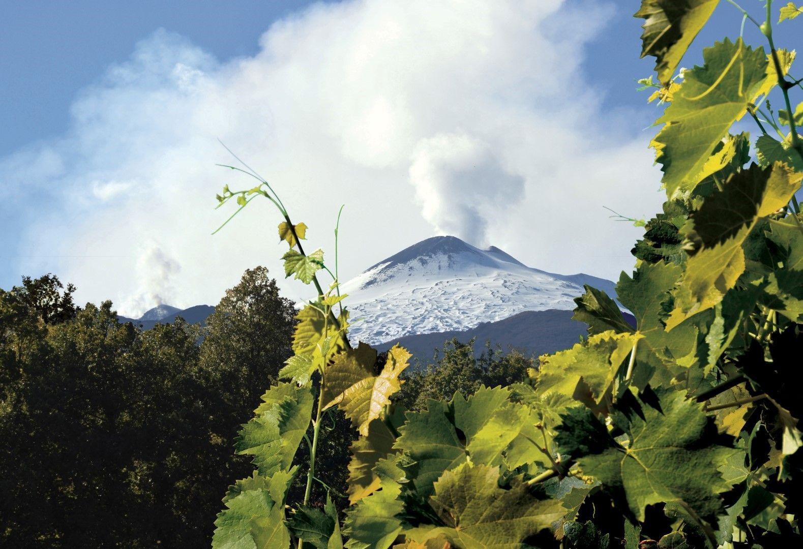 ©all copyright reserved by Firriato - Montagna 1 - Custodiamo un Terroir autentico